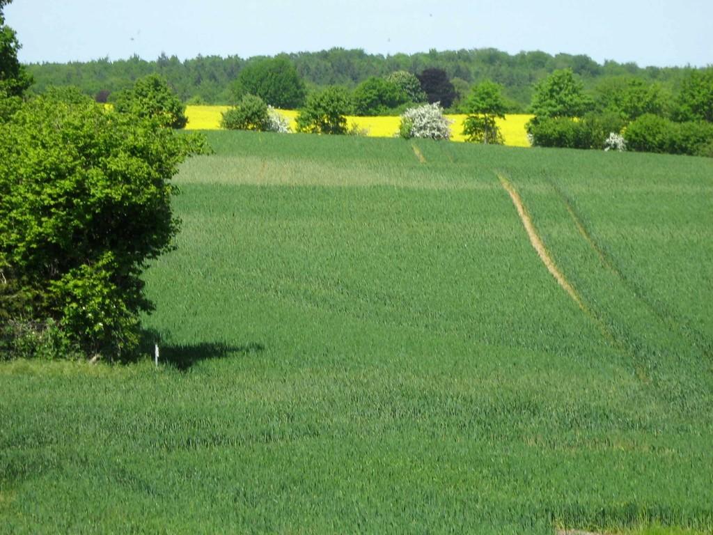 Landschaft_Kuechenfenster
